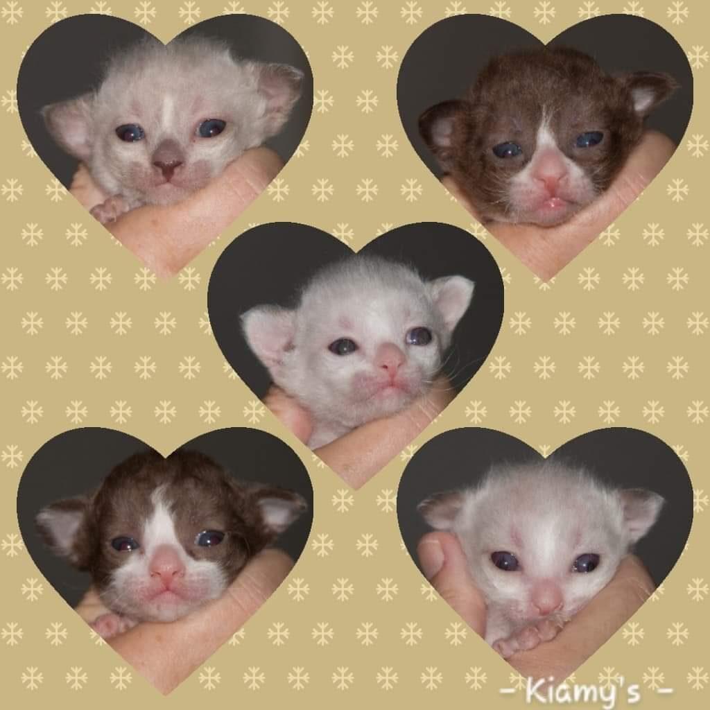 Deze afbeelding heeft een leeg alt-attribuut; de bestandsnaam is kittens-brie-1-1024x1024.jpg